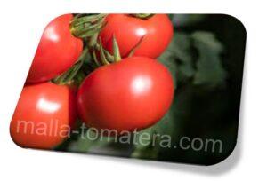 malla tomatera