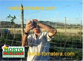 La instalación de la malla tomatera,