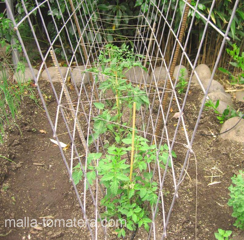 cultivo de jitomate con malla tomatera HORTOMALLAS.
