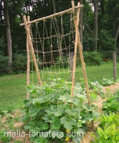 cultivo con el uso de malla tomatera.