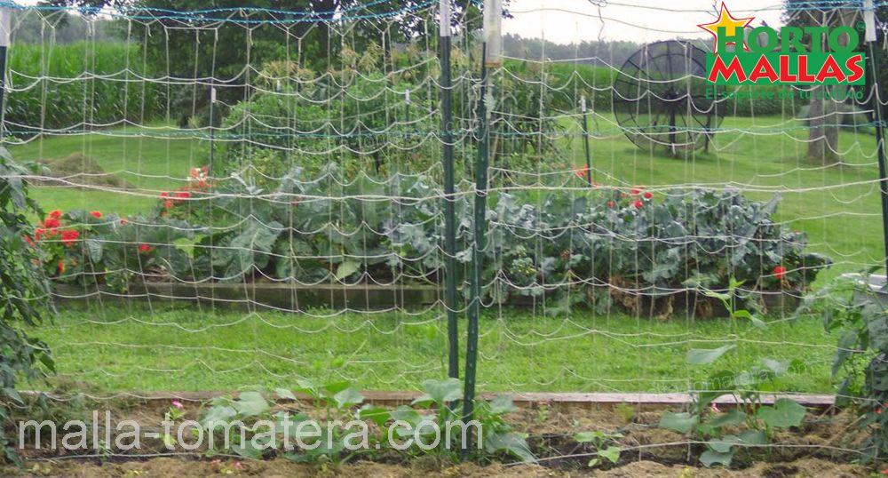 malla tomatera en invernadero