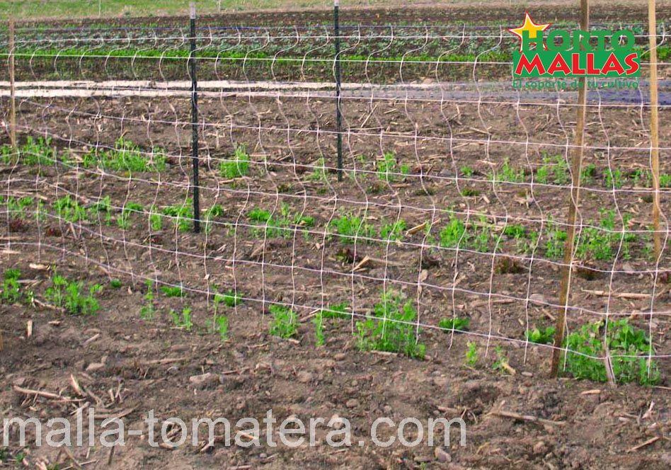 cultivo de tomate con implementacion de HORTOMALLAS.