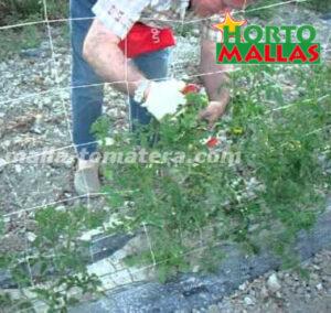 malla para cultivo de tomate